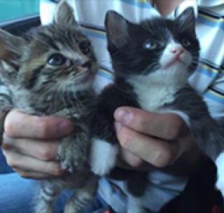 给自家猫和二哈玩了下换脸,迷之合适非常魔性了~#萌宠##搞笑段子#