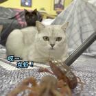 #萌宠食谱大曝光#白汤圆是找到新伙伴了?还是找到食物了?#宠物##我要上热门#