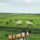 日本稻田艺术,太可爱了!
