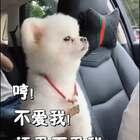 连宠物们都知道会一门外语很重要!??????#搞笑##宠物#