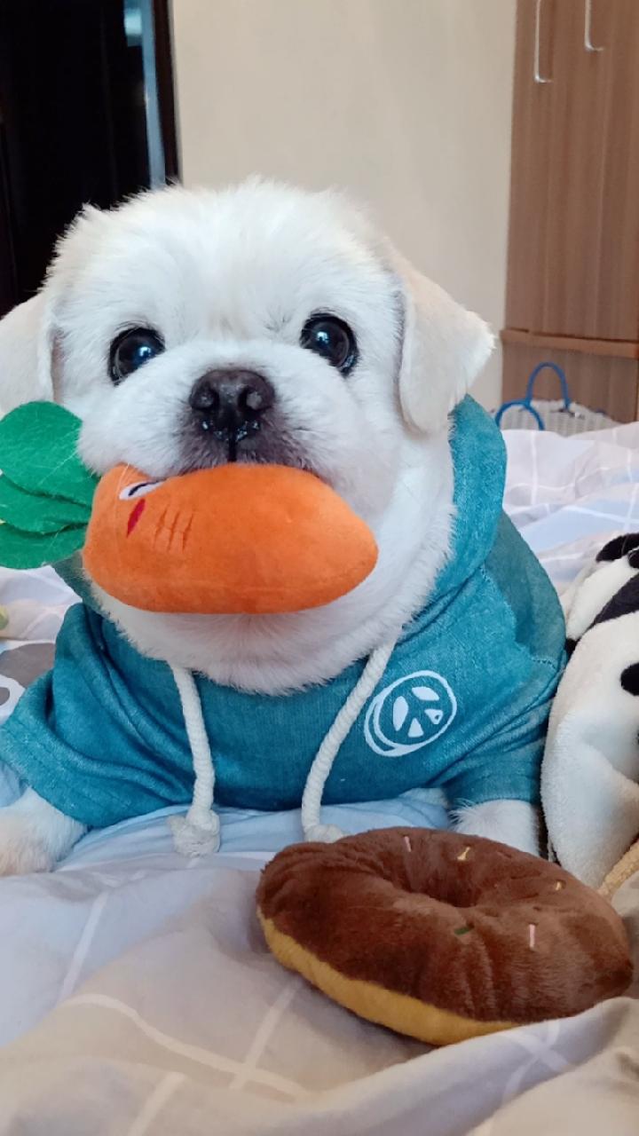 #宠物# 用心做的淘宝店铺→(土豆麻自制宠物零食http://shop.m.taobao.com/shop/shop_index.htm?spm=0.0.0.0&shop_id=117933639 )