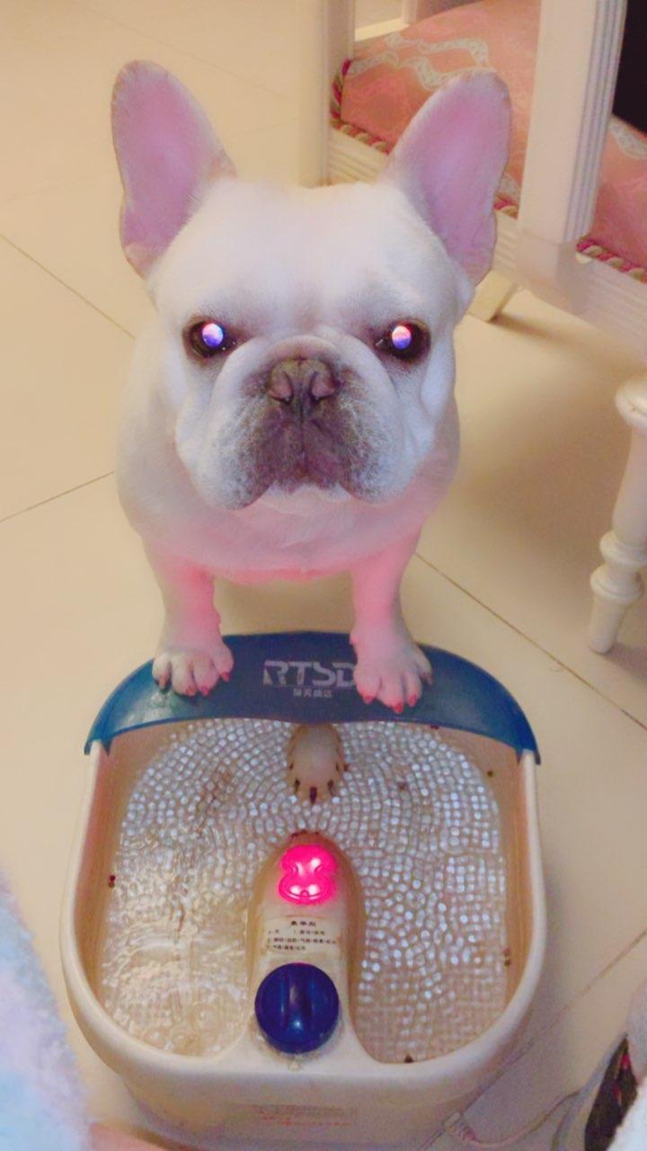 看家福#宠物##元宵节快乐##来福和多吉#@宠物频道官方账号 @美拍小助手 @六喵二汪