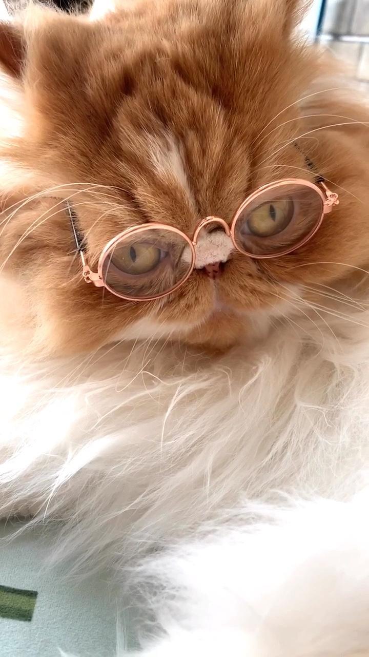 #宠物##我的宠物萌萌哒##弯弯诺诺coco念念#就弯弯不爱戴眼镜👓