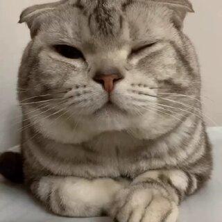瞬间就暖和了(??ω??)#萌宠##我要上热门@美拍小助手##猫#