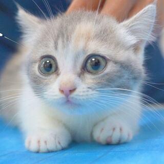 餃子和元宵去醫院打第二針,結果被各個醫生抱著輪流吸,小奶貓真是太可愛了!但是還是要打針!