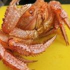 一只螃蟹五種吃法,你最喜歡那種?#美食#