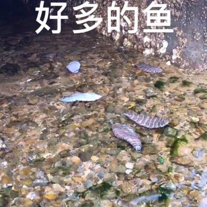 趕海#農村生活##戶外趕海#