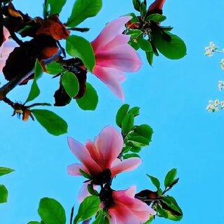 #逛拍##春天來了花兒就會開了##宅出新花樣#????好想睡到自然醒????聽聽音樂晚安???♀????????♀?????