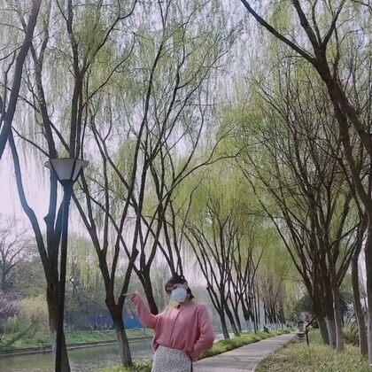 我又出來放風啦?? 今兒個天氣可太好了~#apink##mr.chu##韓舞##舞蹈#