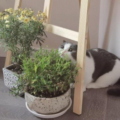 我說為什么這盆草一直養不活