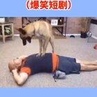 #搞笑视频##搞笑宠物#在不起来我我就排尿了啊