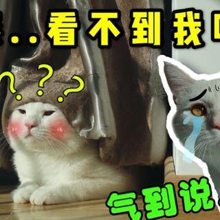 快来吸蒜蒜~~这个傻乎乎猫真的太好吸了!脑子不太聪明又爱叨叨的亚子太可爱了! #猫##宠物##我要上热门# @美拍小助手@美拍大学