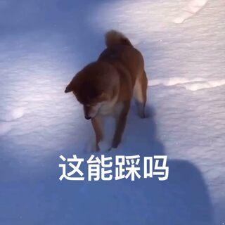 #搞笑视频##萌宠#@美拍小助手 下个雪路都不会走了