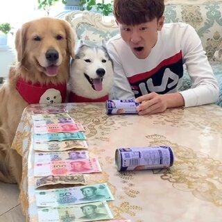 在家呆着,也能玩的很开心#宠物狗狗#