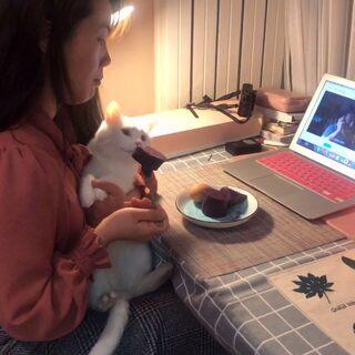 下班無社交!只有貓咪等自己回家,習慣并且享受一個人的生活,偶爾孤單。愿你一個人也能過得精彩浪漫#我的獨居日常##北漂生活#@美拍小助手