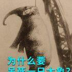 为什么要处死一头大象?#我要上热门#@美拍小助手