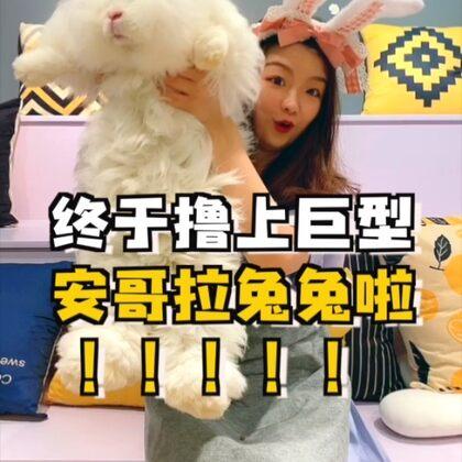 超大安哥拉兔隨便擼?太幸福了!但是最后店員小哥是啥意思?#我的寵物萌萌噠#