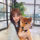 柴犬好可爱!!!
