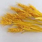 #手工#皱纹纸麦穗大麦