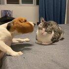 吃瓜群众惊呆了#吸猫所##宠物#
