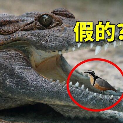 这些画风清奇的野生动物组合是真是假?#我要上热门#@茄子视频小助手
