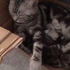 猫妈妈和崽崽,动物的爱也是那么无私!愿世间多点温柔????