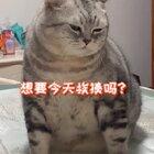 想要今天挨揍吗?#吸猫所##宠物#