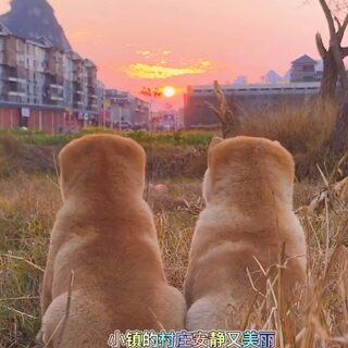 夕阳下,你和我#中华田园犬#