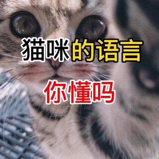 猫咪的语言你懂吗