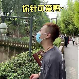 #美图创作者计划##六月碎片# 领兆博gie,进城看大熊猫~#美图创作者计划##六月碎片#